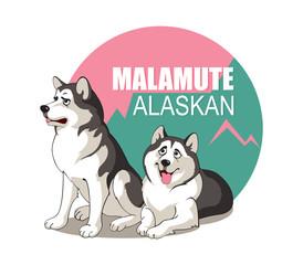 Malamute Alaskan