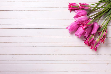 Background with fresh  bright pink tulips flowers