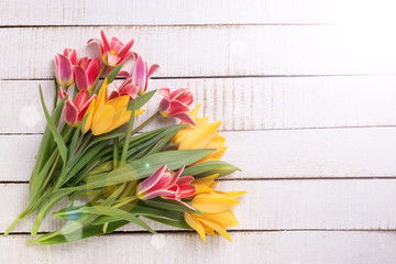 Fresh  spring yellow and pink  tulips flowers