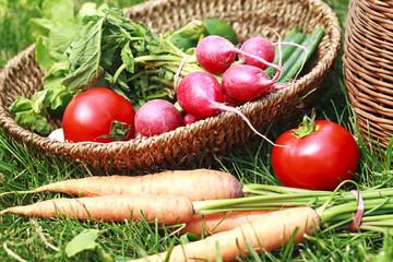 fresh seasonal organic vegetables