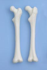 Der menschliche Körper - Oberschenkelknochen