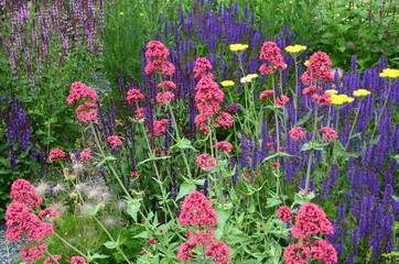 Sommergarten - Bunter Sommerblumenmix