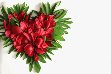 Background red flower petals