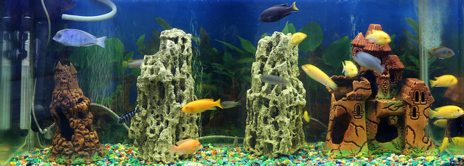 Beautiful semi-circular aquarium with tropical fish