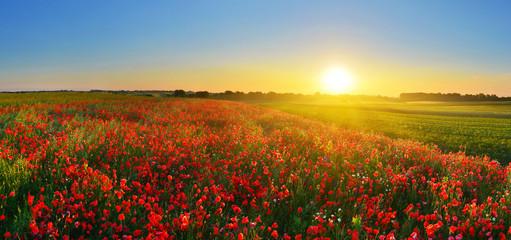 Acrylic Prints Village Poppy field at sunrise