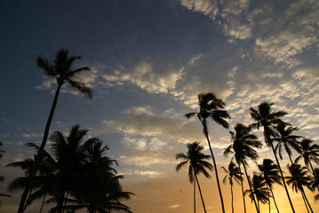Sunset With Coconut Trees