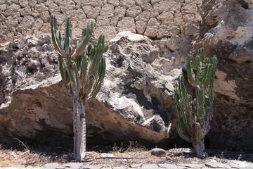 Piante grasse a San Juan, Tenerife - Isole Canarie