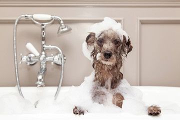 Funny Dog Taking Bubble Bath Wall mural