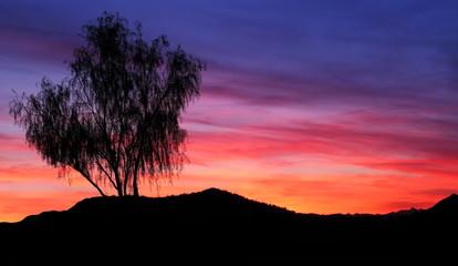 Sunset in Desert Arizona, USA
