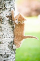 Little red kitten on the tree