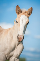 Wall Mural - Portrait of beautiful foal on the background of blue sky