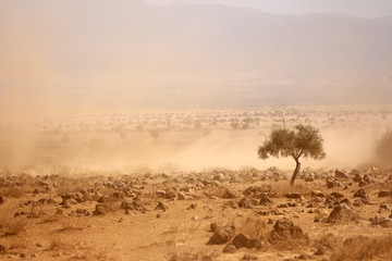 Dusty plains during a drought, Kenya
