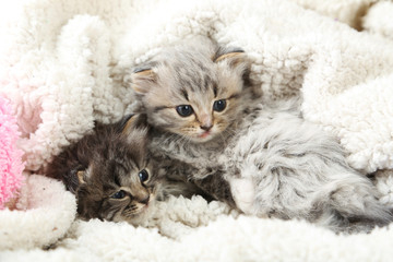 Small kittens on the plaid