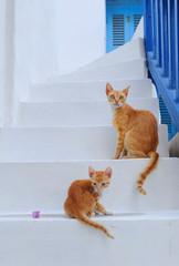 Cats at Mykonos