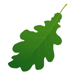 Wall Mural - green oak leaf