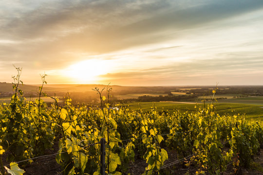 Early summer in Champagne, France