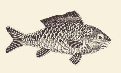 Fish Bream vintage engraved vector illustration, hand drawn