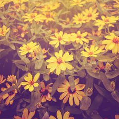 yellow flower with vintage effect