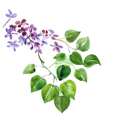 The leaves of lilac