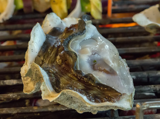 fresh shell oysters cooking seafood.