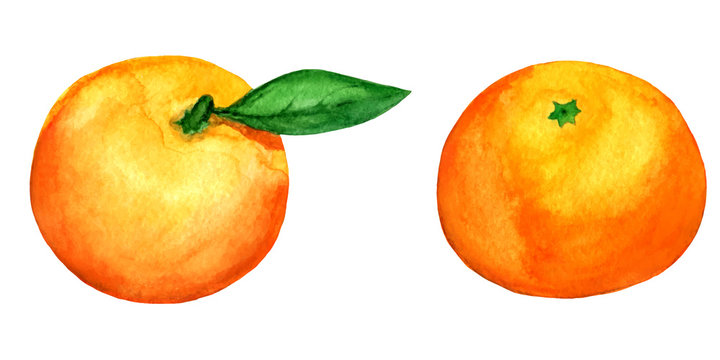 set of 2 vector watercolor tangerines isolated on white backgrou