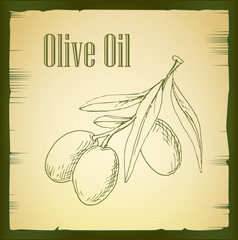 hand drawn olive branch - vector