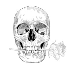 Skull holding rose in his the mouth. Vector hand drawn illustration for Day of the Death.