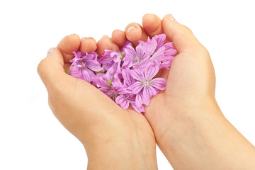 Delicate spring lilac flowers in hands