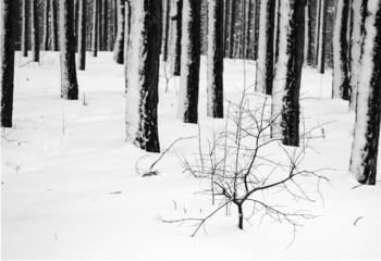 Concept winter landscape in black and white