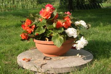 Donice kwiatowe - czerwone i białe kwiaty - kompozycja