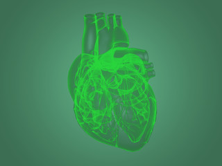 X-ray heart anatomy