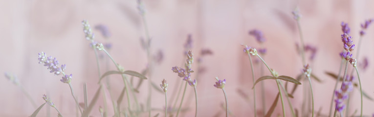 Spoed Fotobehang Lavendel Lavendel, Bokeh