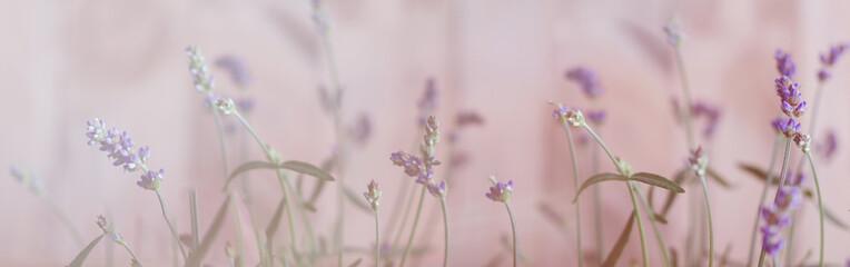 Foto op Canvas Lavendel Lavendel, Bokeh