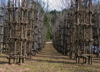 Il favoloso parco di Arte Sella nelle splendide DOLOMITI ITALIANE