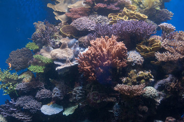 Koralle 2