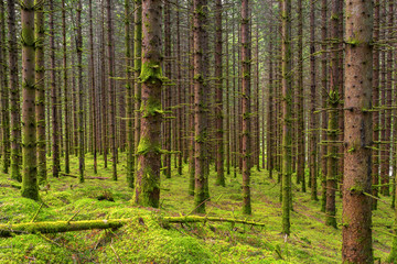 Wald Bäume mit Moos