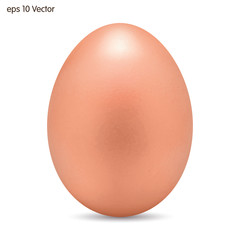 Egg on a white background. Vector