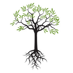 Young Olive Tree with Green Leafs and Roots. Vector Illustration