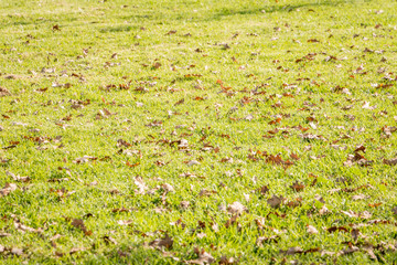 Grass and fallen leaves