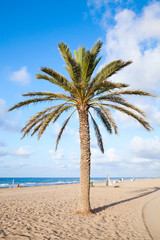 Palm tree grow on empty sandy beach