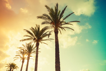 Palm trees, shining sun on cloudy sky background