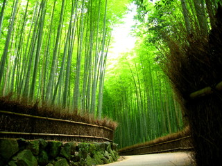 Poster Kyoto 竹林 Bamboo