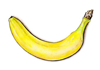 Banana isolated on white background. Watercolor illustration. Tropical fruit