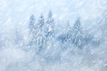 Winter forest scene with snowfall. Beautiful heavy snowfall forest landscape background.
