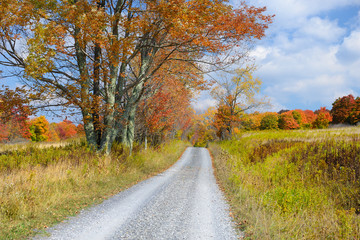 Fototapete - Country Road in Autumn in West Virginia