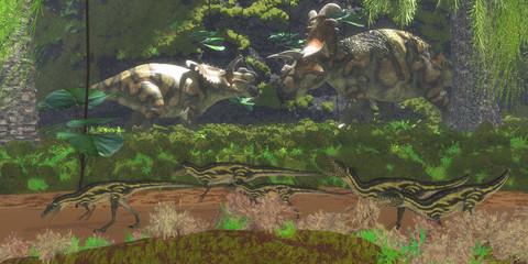 Albertaceratops Disagreement