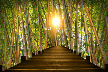 Steg im Bambuswald