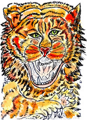 Tiger Sketch