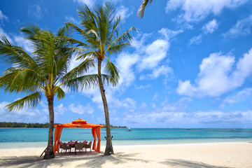 Wall Mural - Lunch time on tropical sandy beach in Mauritius Island