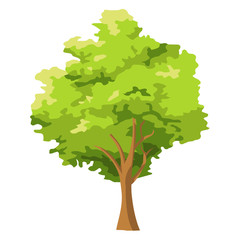 tree isolated illustration